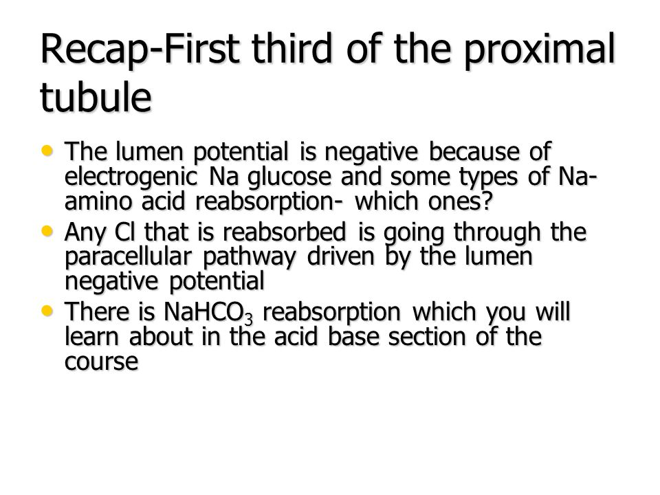 Recap-First third of the proximal tubule