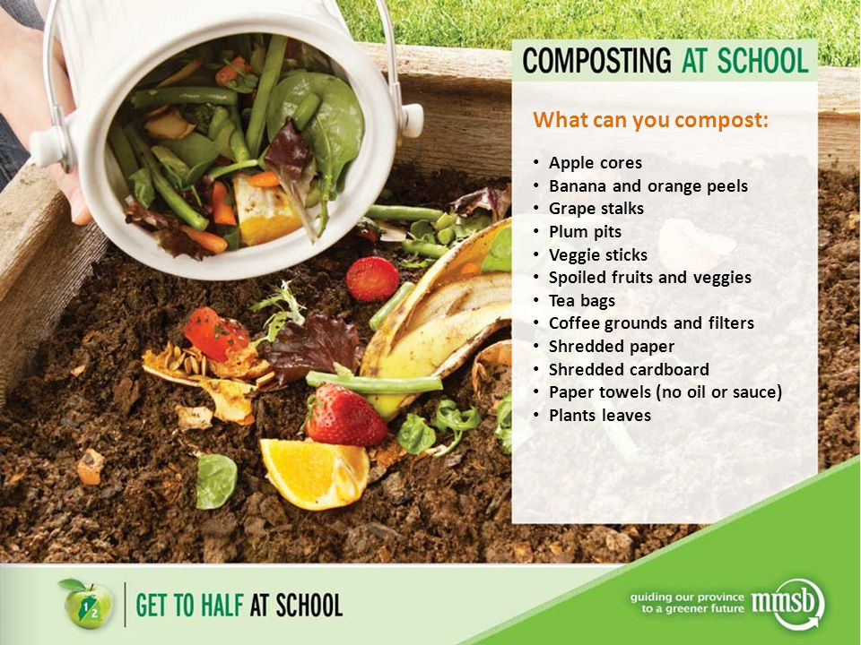 What can you compost: Apple cores Banana and orange peels Grape stalks