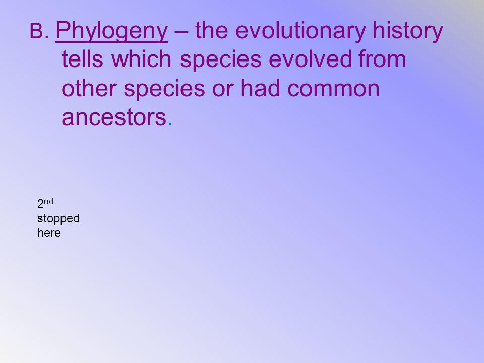B. Phylogeny – the evolutionary history tells which species evolved from other species or had common ancestors.