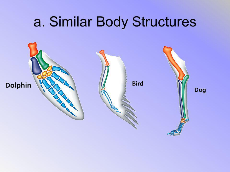a. Similar Body Structures