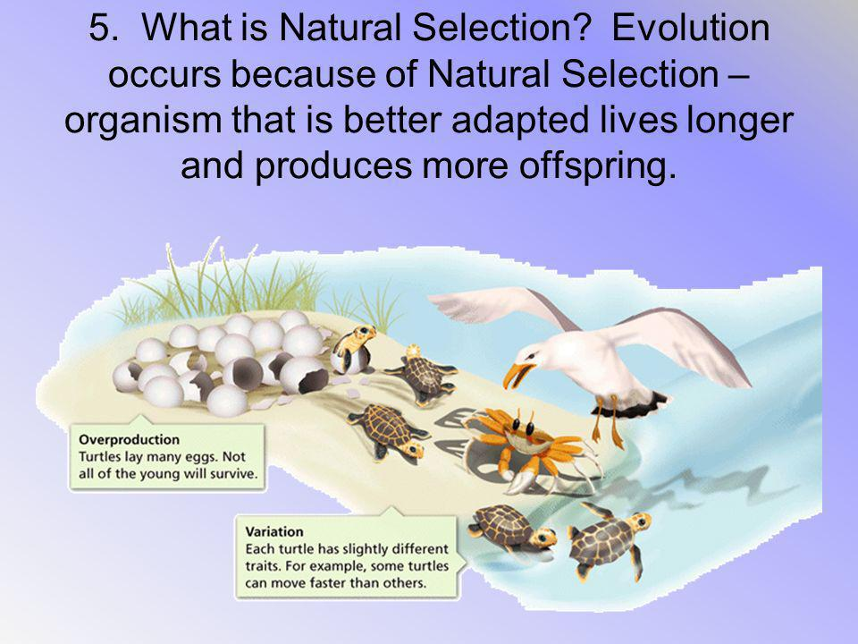 5. What is Natural Selection