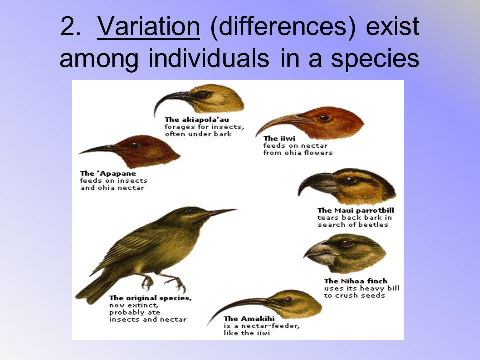 2. Variation (differences) exist among individuals in a species