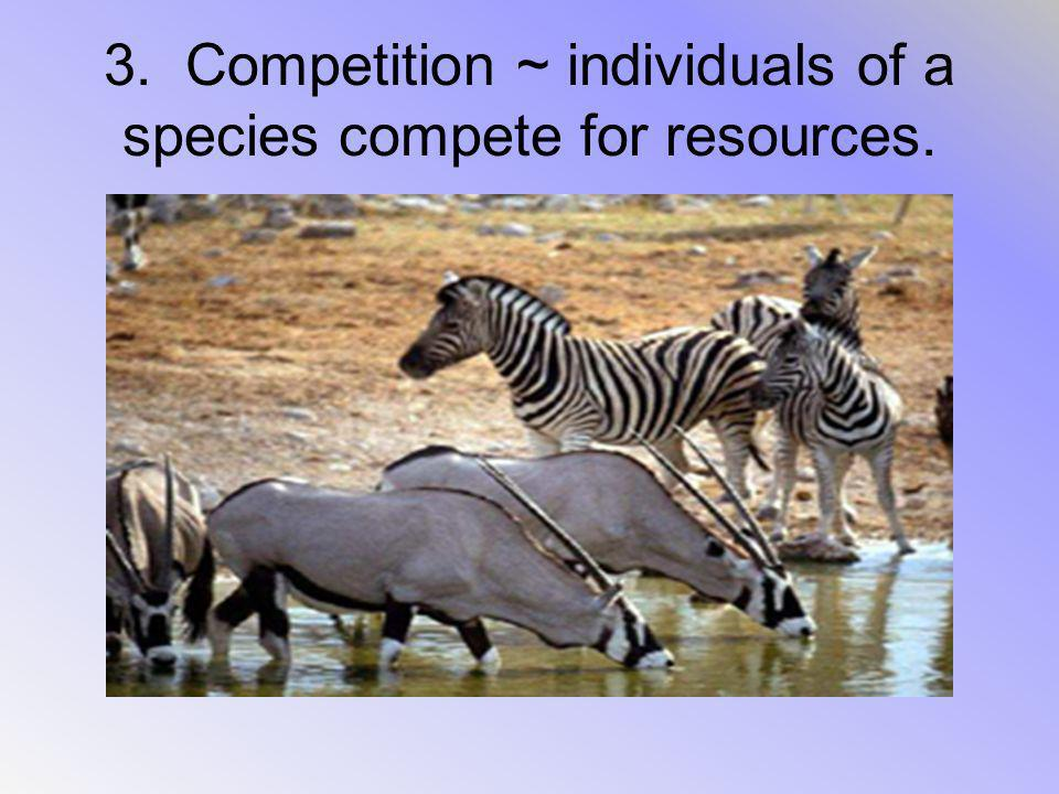3. Competition ~ individuals of a species compete for resources.