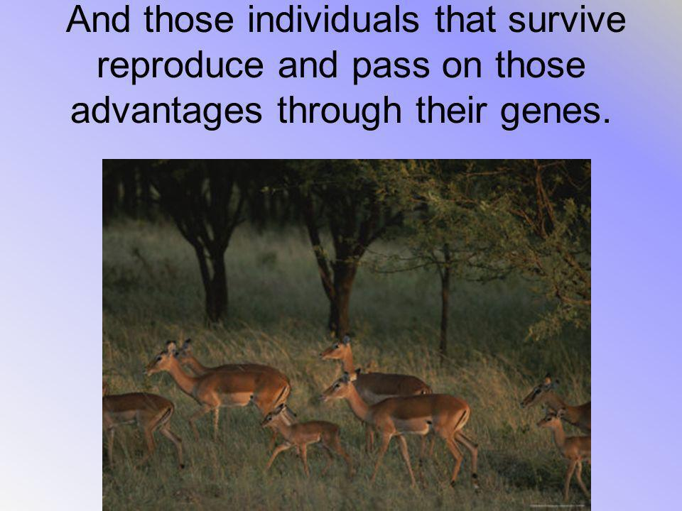 And those individuals that survive reproduce and pass on those advantages through their genes.