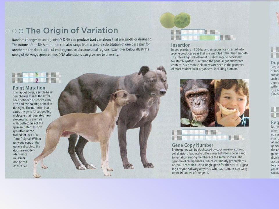 The variations can be a result of heredity or mutations