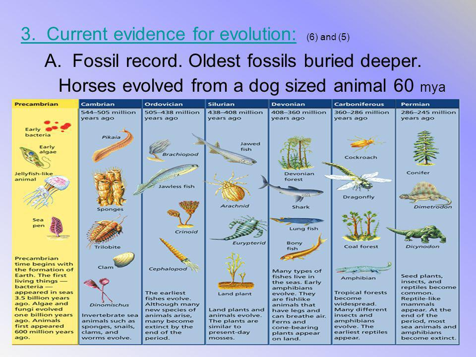 3. Current evidence for evolution: (6) and (5)