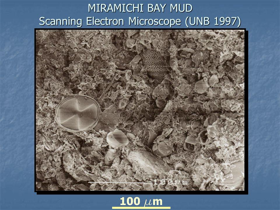 MIRAMICHI BAY MUD Scanning Electron Microscope (UNB 1997)