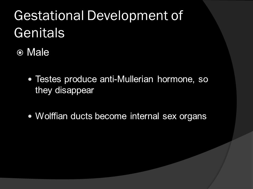Gestational Development of Genitals