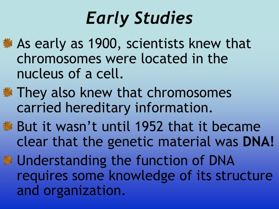 Early StudiesAs early as 1900, scientists knew that chromosomes were located in the nucleus of a cell.