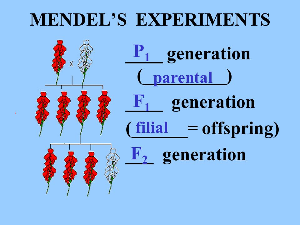 ____ generation (_________) ____ generation (______= offspring)