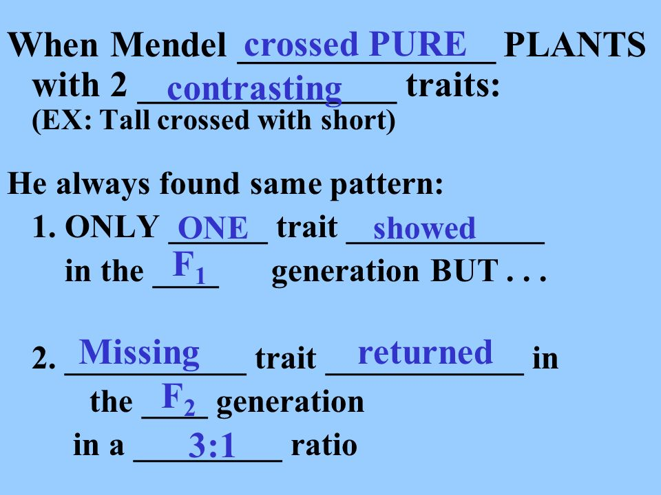 crossed PURE When Mendel ______________ PLANTS with 2 ______________ traits: (EX: Tall crossed with short)