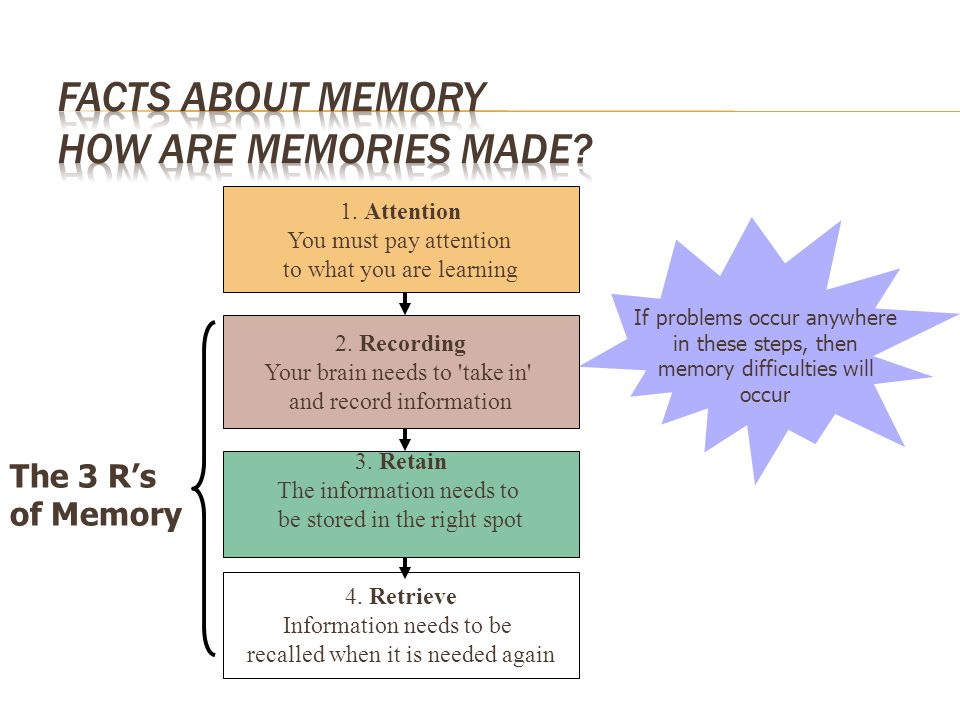 Facts about Memory How are memories made