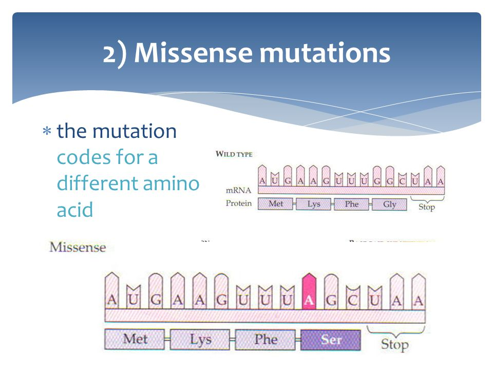 2) Missense mutations the mutation codes for a different amino acid