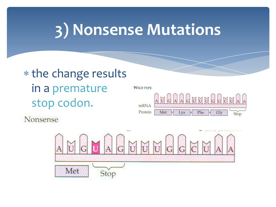 3) Nonsense Mutations the change results in a premature stop codon.