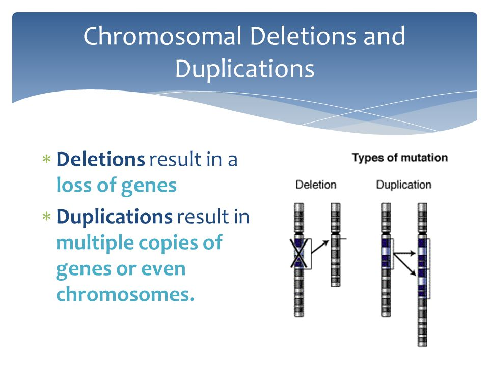 Chromosomal Deletions and Duplications