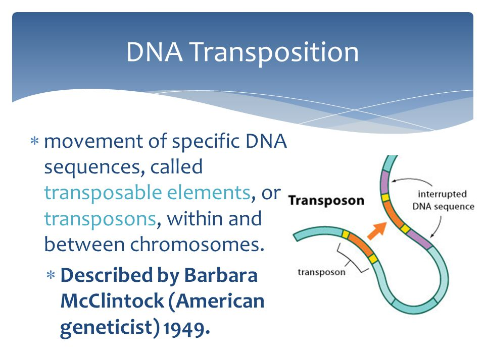 DNA Transposition movement of specific DNA sequences, called transposable elements, or transposons, within and between chromosomes.