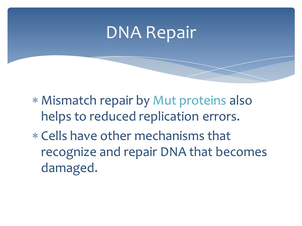 DNA Repair Mismatch repair by Mut proteins also helps to reduced replication errors.