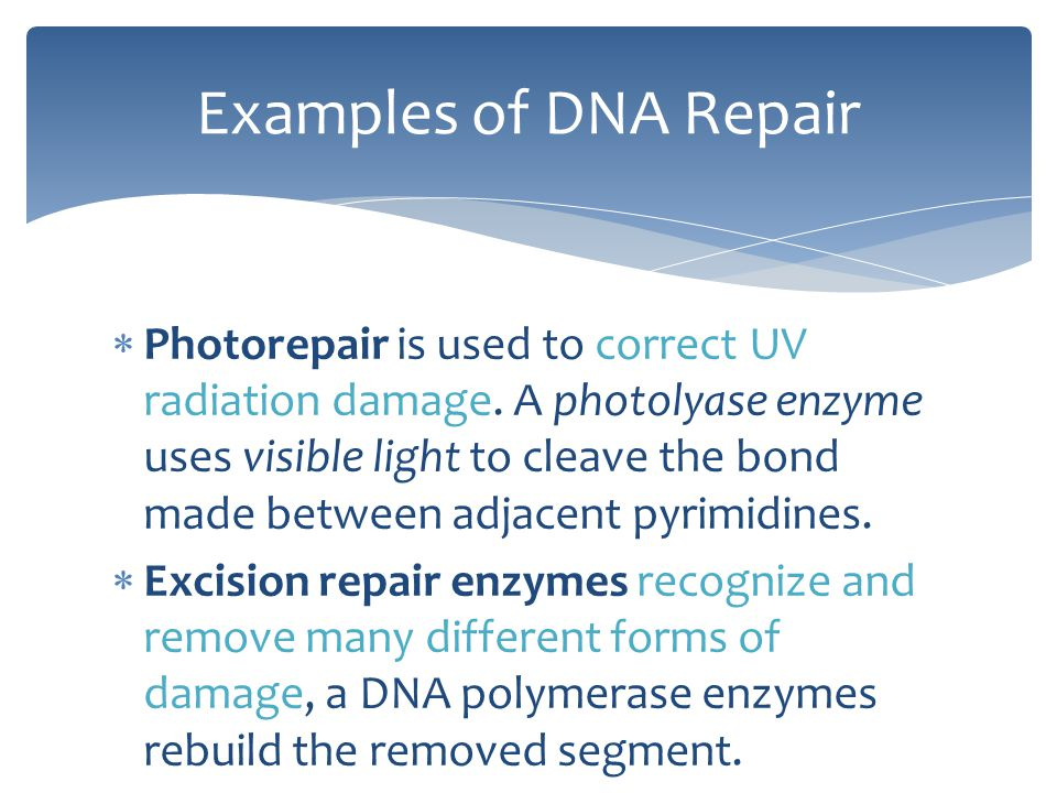 Examples of DNA Repair