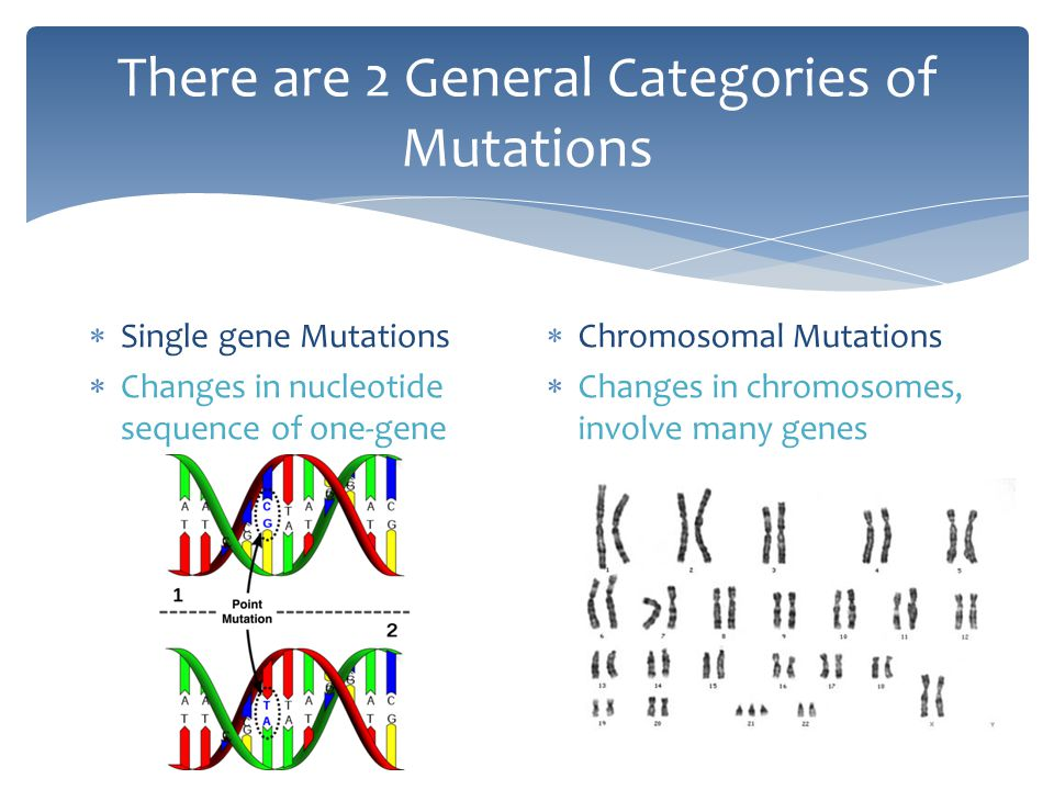 There are 2 General Categories of Mutations