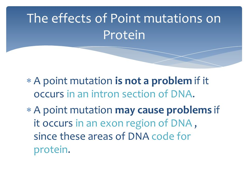 The effects of Point mutations on Protein