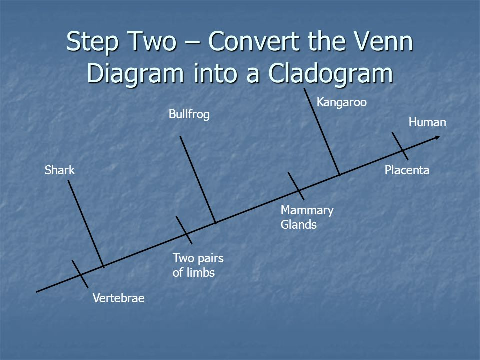 Step Two – Convert the Venn Diagram into a Cladogram