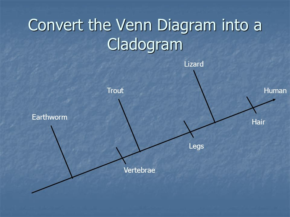 Convert the Venn Diagram into a Cladogram
