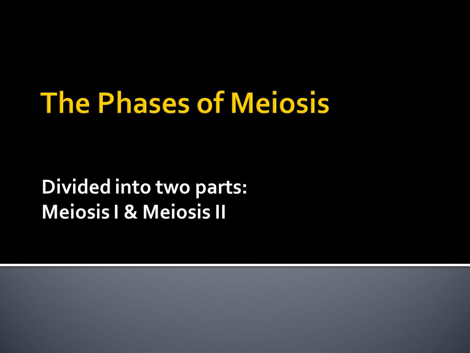Divided into two parts: Meiosis I & Meiosis II