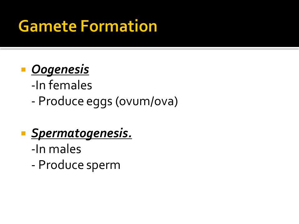 Gamete Formation Oogenesis -In females - Produce eggs (ovum/ova)