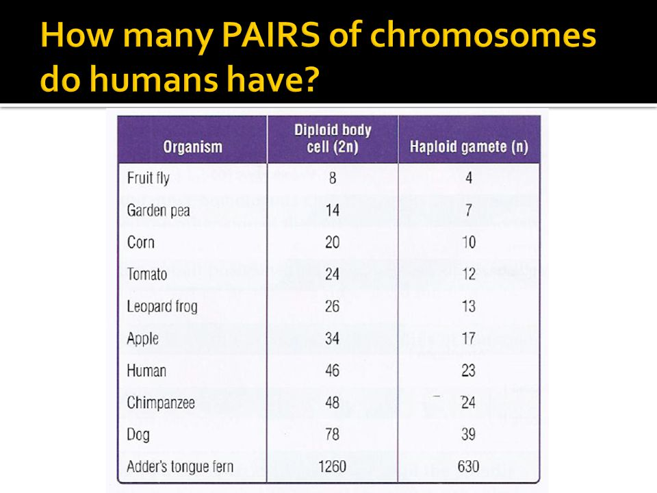 How many PAIRS of chromosomes do humans have