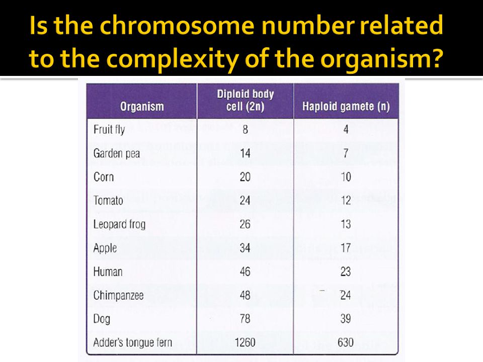 Is the chromosome number related to the complexity of the organism
