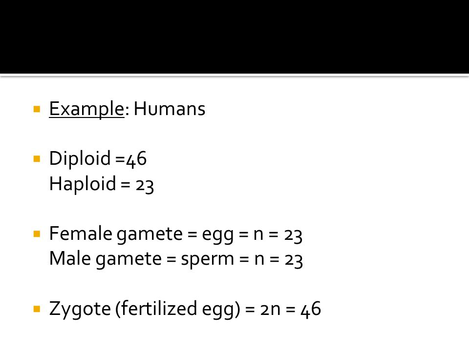 Example: Humans Diploid =46 Haploid = 23. Female gamete = egg = n = 23 Male gamete = sperm = n = 23.