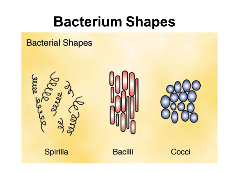 Bacterium Shapes