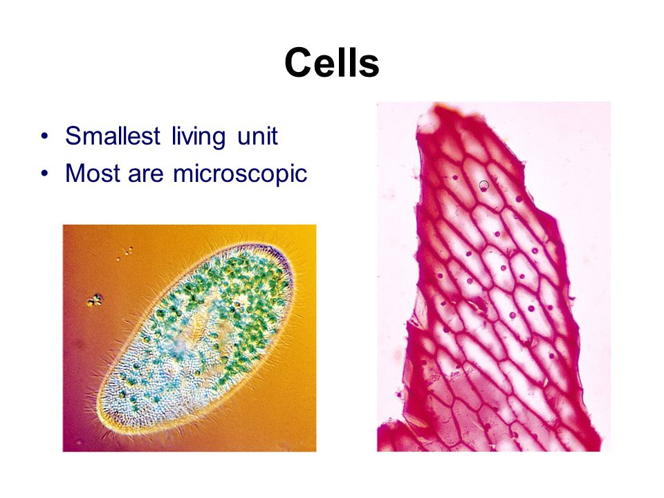 Cells Smallest living unit Most are microscopic
