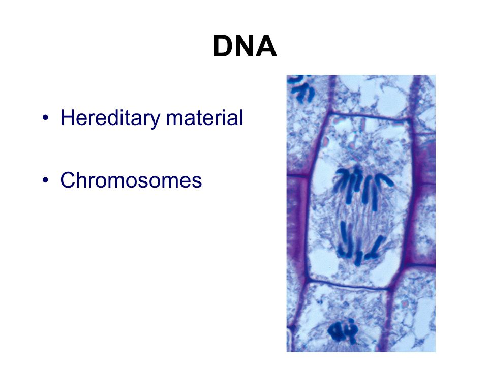 DNA Hereditary material Chromosomes