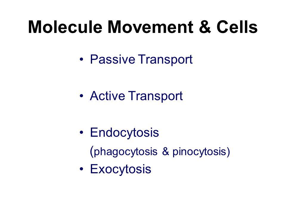 Molecule Movement & Cells