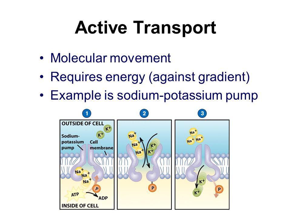 Active Transport Molecular movement Requires energy (against gradient)