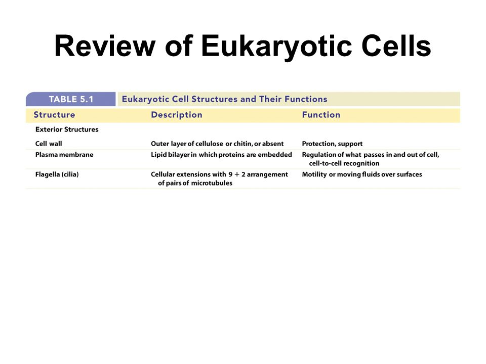 Review of Eukaryotic Cells
