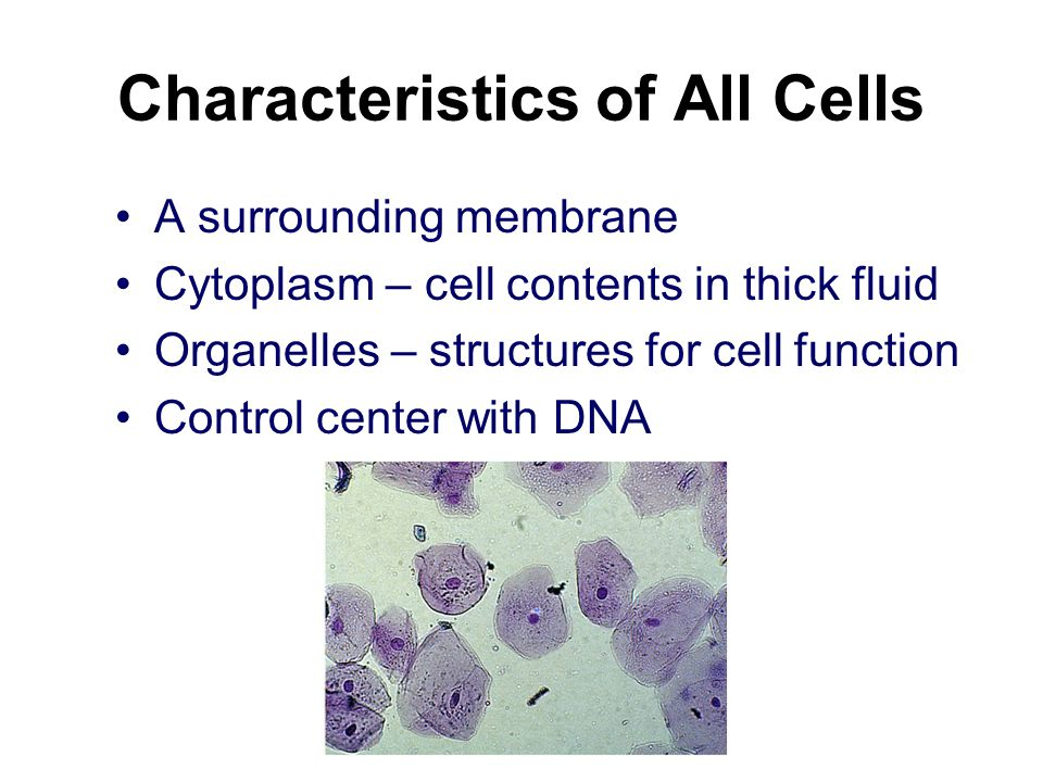 Characteristics of All Cells
