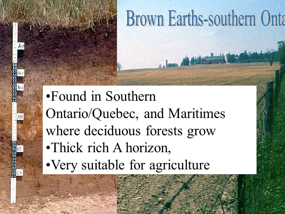 Brown Earths-southern Ontario