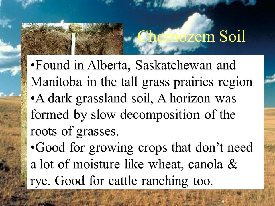 Chernozem Soil Found in Alberta, Saskatchewan and Manitoba in the tall grass prairies region.