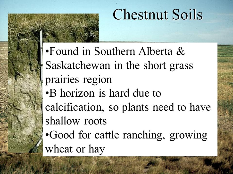 Chestnut Soils Found in Southern Alberta & Saskatchewan in the short grass prairies region.