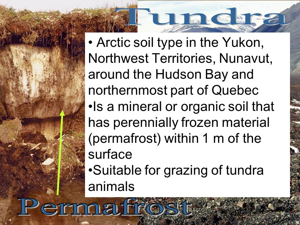 Tundra Arctic soil type in the Yukon, Northwest Territories, Nunavut, around the Hudson Bay and northernmost part of Quebec.