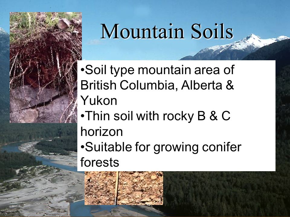 Mountain Soils Soil type mountain area of British Columbia, Alberta & Yukon. Thin soil with rocky B & C horizon.