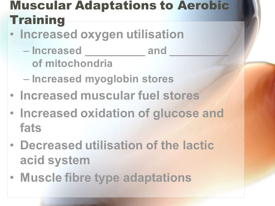Muscular Adaptations to Aerobic Training