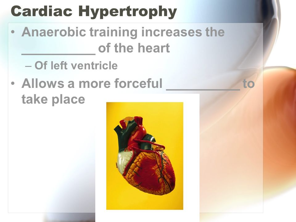 Cardiac Hypertrophy Anaerobic training increases the __________ of the heart.