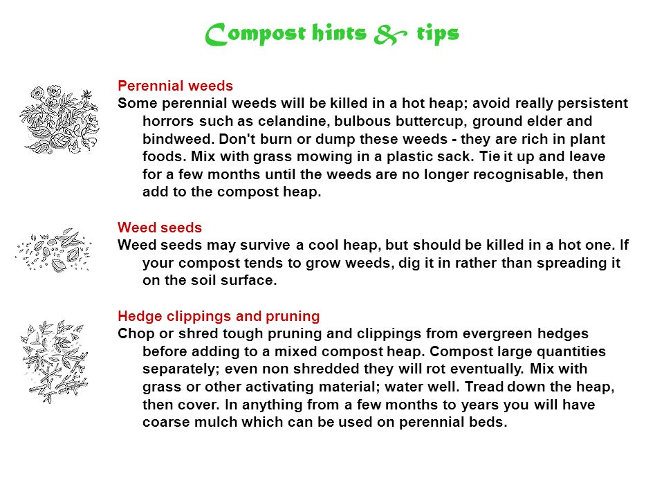 Compost hints & tips Perennial weeds