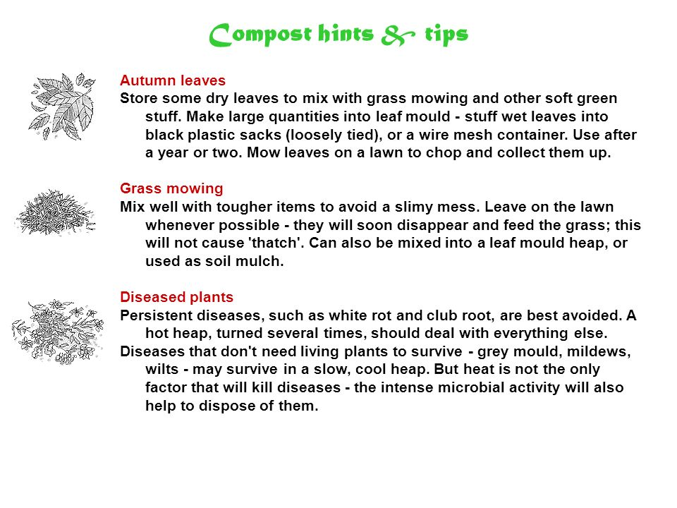 Compost hints & tips Autumn leaves