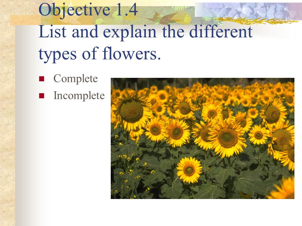 Objective 1.4 List and explain the different types of flowers.
