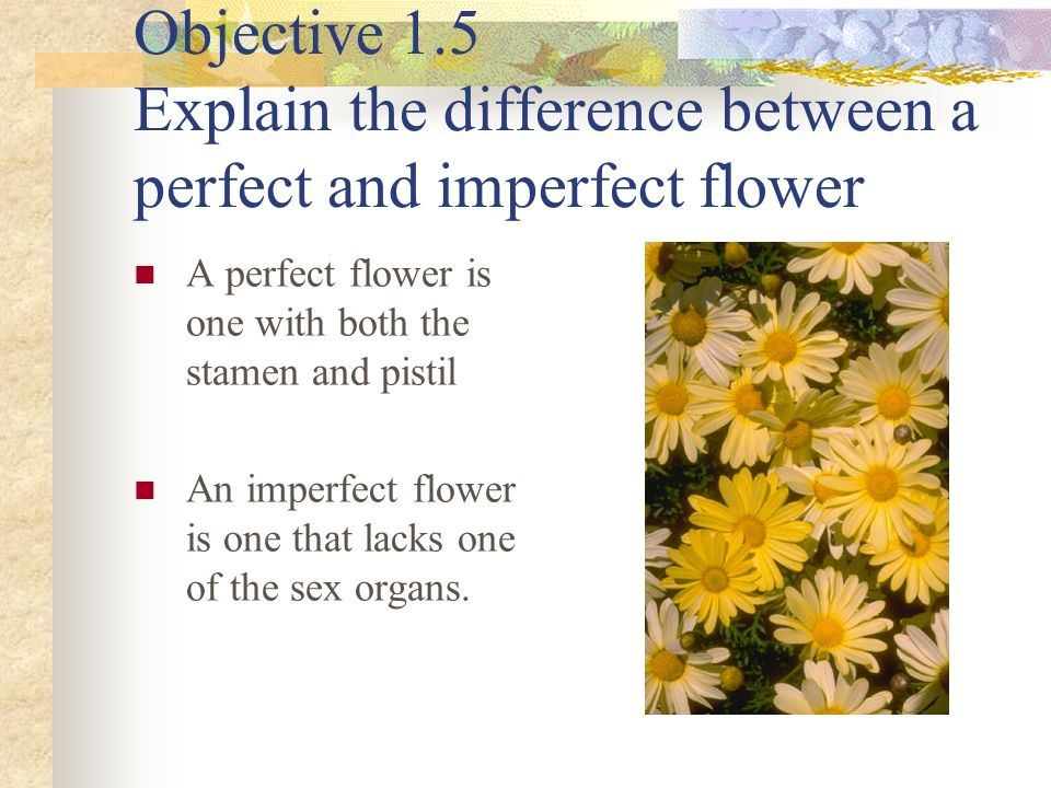 Objective 1.5 Explain the difference between a perfect and imperfect flower