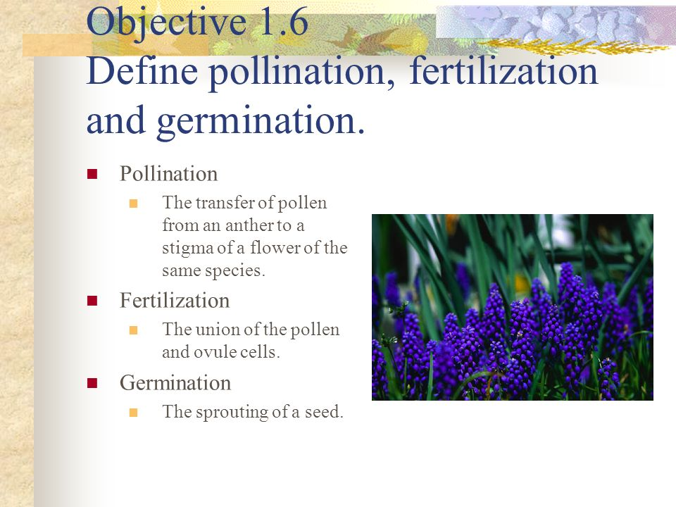 Objective 1.6 Define pollination, fertilization and germination.